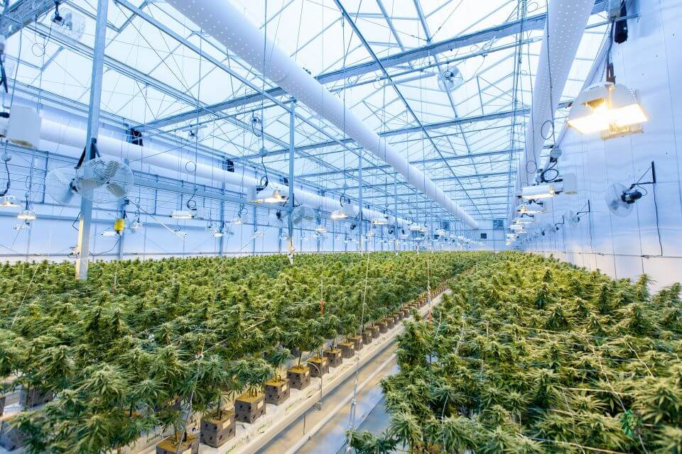 rows of plants inside of a cultivation center